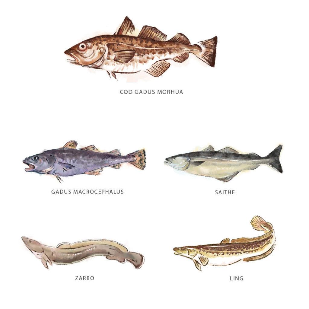 Cinco tipos de peixes que podem ser considerados bacalhau, ingrediente destaque nas receitas da Quaresma.